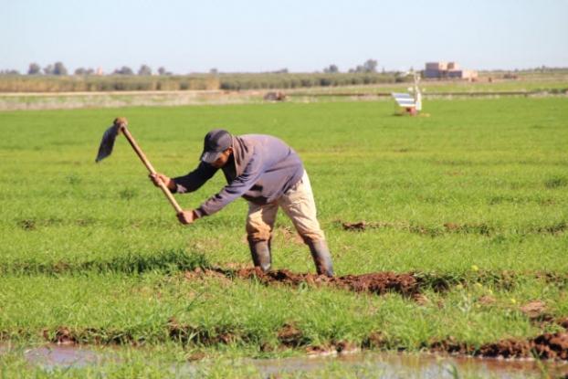 st_irrigation_cesbio.jpg